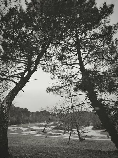 Beauty In Nature Tranquility Forets No People Lake View Blackandwhite Leognan Aquitaine Gironde Bordeaux France🇫🇷 Outdoors Lacbleu