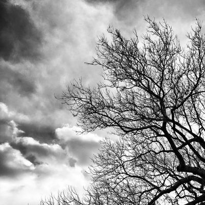 IPhoneography TreePorn Trees Tree And Sky Weather Skyporn Sky And Clouds Sky Clouds And Sky Clouds Cloudporn Cloud Winter Sky Blackandwhite Black And White Blackandwhite Photography 366dailies Camera+
