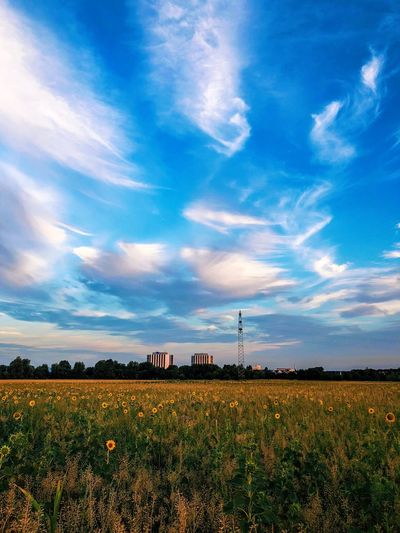Sunrise Sky Cloud - Sky Landscape Field Plant Environment Beauty In Nature Scenics - Nature Agriculture Land Nature Tranquil Scene Growth Outdoors Farm