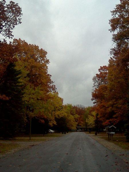 Taking Photos TreePorn #landscape #nature #photography EyeEm Nature Lover