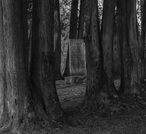 Check This Out Solitude Graveyard Beauty From Where I Stand Blackandwhite OpenEdit Black And White Nature Black And White Photography Black And White Collection  Civil War History New England's Endless Beauty! Forest Photography In The Forest Surrounded By Trees Graveyard Collection