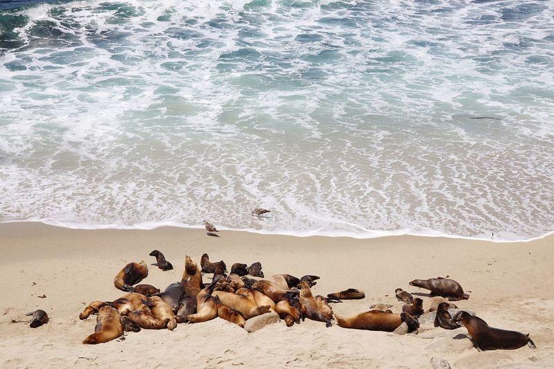 Seal Beach,