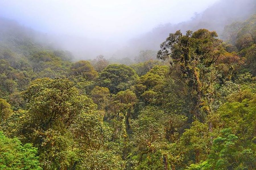 Hutan di Kawah Gunung Klabat, entah sudah berapa lama mereka disana ! Pohon . . . 📍 Kawah Gunung Klabat - Airmadidi - Sulawesi Utara 📷 Nikon D3200 Sulawesiutara Manado Minahasa Minahasautara Gunungklabat Instagunung Instagunung_ @instagunung_