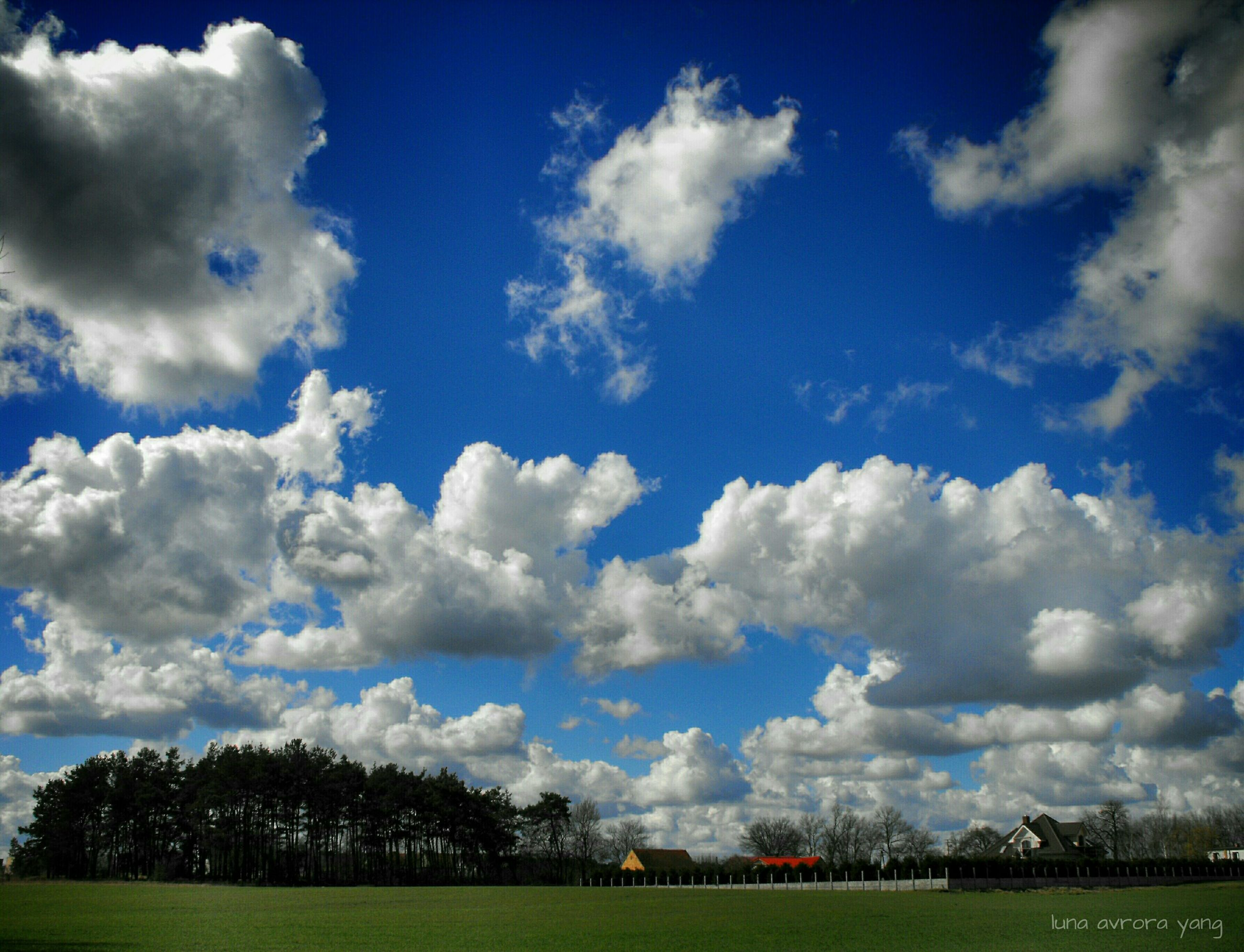 grass, sky, cloud - sky, field, tree, blue, cloud, landscape, tranquil scene, tranquility, grassy, cloudy, beauty in nature, nature, green color, scenics, growth, day, lawn, outdoors