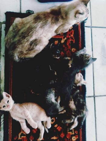 RePicture Family Cat Cats
