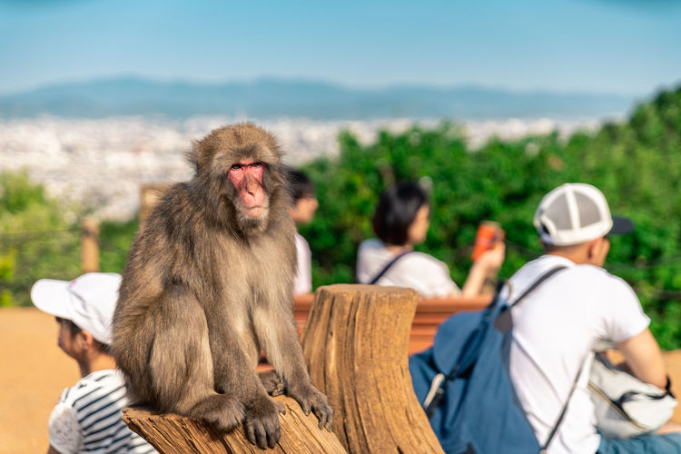 A monkey in a