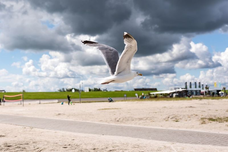 Neuharlingersiel, North Germany Sky Cloud - Sky Day Outdoors Nature Animal Themes Sand Beach Bird Animals In The Wild Flying Spread Wings Seagull
