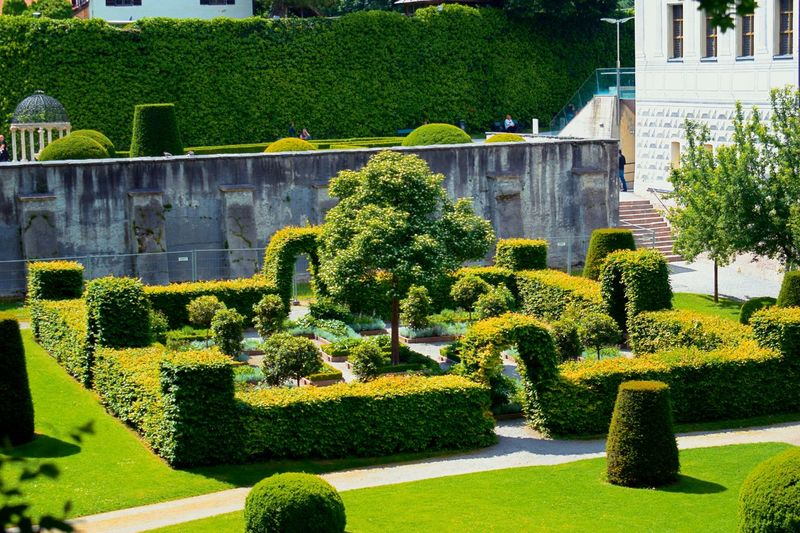 Schloss Amras Castle Schloss Ambras Tree Sunlight Topiary Architecture Building Exterior Built Structure Plant Green Color Grass Garden