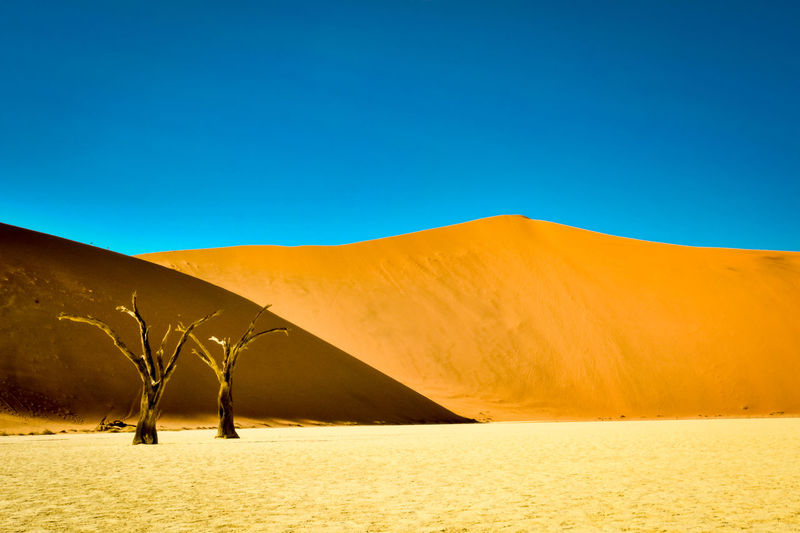 Arid Climate Arid Landscape Beauty In Nature Blue Clear Sky Day Dead Vlei Desert Desert Beauty Desert Landscape Dunes Landscape Namibia Nature No People Outdoors Sand Sand Dune Scenics Sky Sossusvlei Sossusvlei Desert Sunlight Tranquil Scene Tranquility The Great Outdoors - 2017 EyeEm Awards The Great Outdoors - 2017 EyeEm Awards Lost In The Landscape