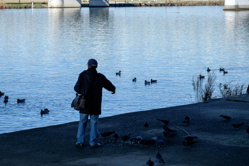Birds Calm Duck Edogawa River Feeding  Feeding Animals Fujifilm Fujifilm X-E2 Fujifilm_xseries Outdoors Pigeons River Riverside Water Waterfront 江戸川 餌やり 鳥