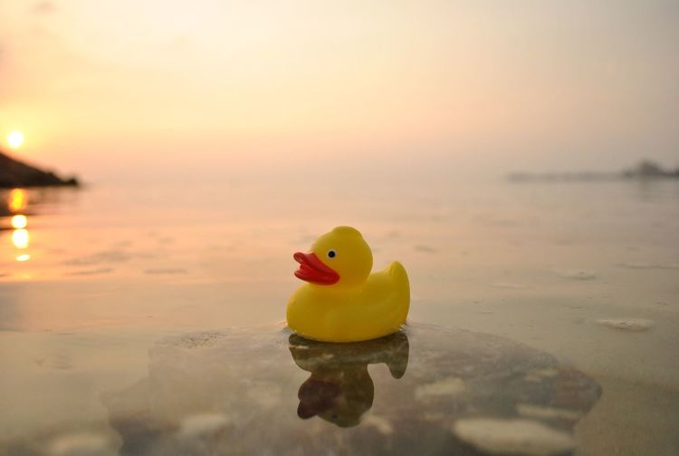 hello EyeEm Water Sunset Reflection Horizon Over Water Toy Sea Tranquil Scene Rubber Duck Tranquility Waterfront Scenics Yellow Beak Beauty In Nature Nature Focus On Foreground Standing Water Swimming Vibrant Color Non-urban Scene OPD First Eyeem Photo