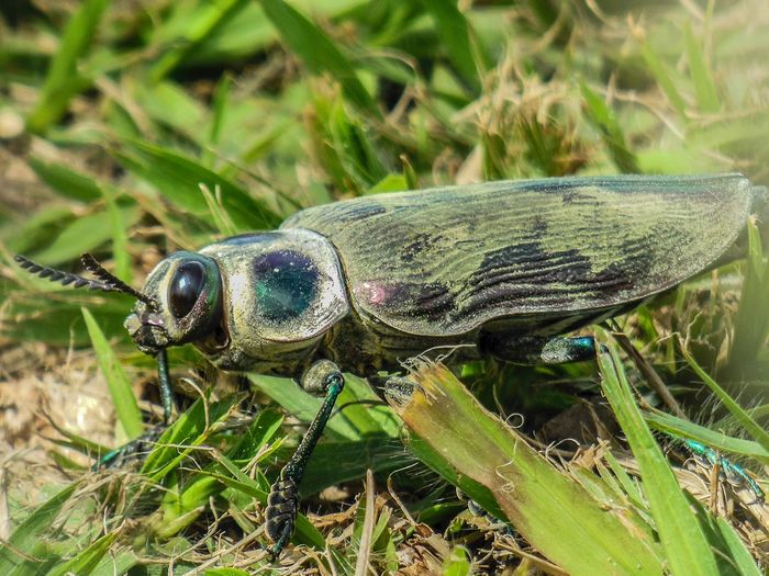 Close-up of cicada on field