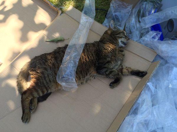 Freddie My Cat Garden Home Inmidst Mittendrin