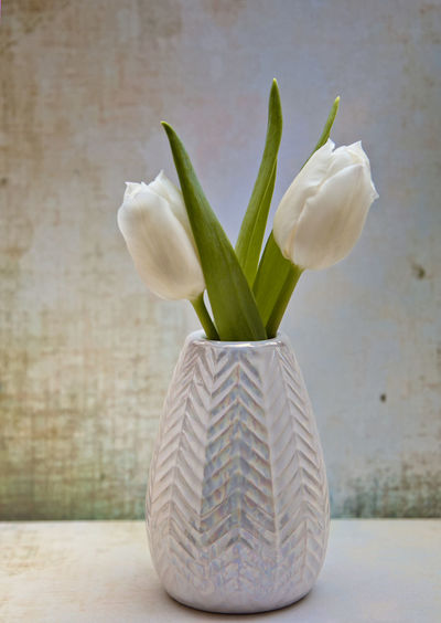 Tulip Plant Flower Freshness Close-up Flowering Plant Table No People Indoors  Beauty In Nature Vulnerability  Nature Vase Still Life Green Color Decoration Fragility Focus On Foreground Petal Growth Inflorescence Flower Head Tulpen StillLifePhotography Nature_collection Nature Photography The Minimalist - 2019 EyeEm Awards