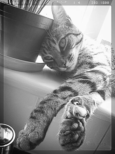 My Little Munchkin 💜 Black And White Photography 💋💋💋