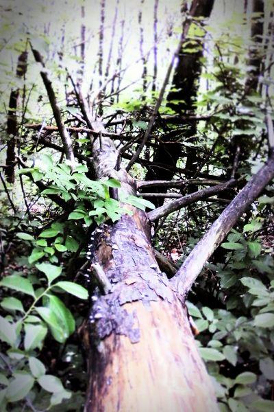 Trees Natural Beauty Enjoying Life EyeEm Gallery Tree Butiful♥ Spektrum Fokus