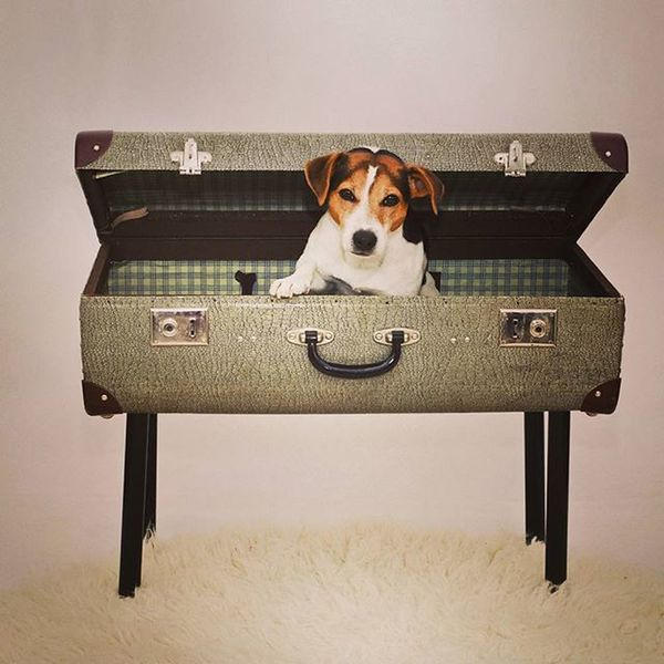 чемоданное настроение Jrt Jackrussell Jackrusselltravel Suitcase Instadog джекрассел яжгут