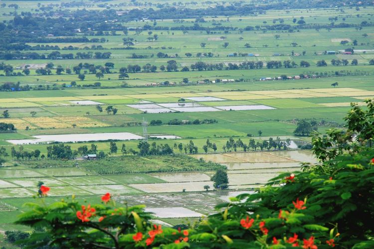 Landscape Nature Social Issues Beauty In Nature Agriculture Green Color Field Outdoors Rural Scene Flower Plant Scenics Day Growth Red Tree No People Terraced Field Water Freshness Pyinoolwin Mandalay,Myanmar