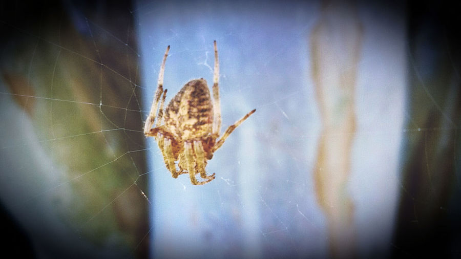 One Animal Close-up Insect Animals In The Wild Vignette Animal Themes Selective Focus Focus On Foreground Nature Day Beauty In Nature Tranquility No People Fragility Extreme Close Up Green Spider Fine Art Photography Spiderweb Insects  Isn't She Lovely?
