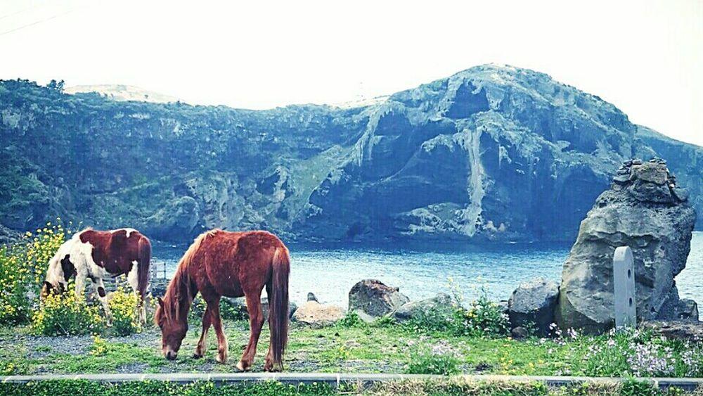 EK's Pic. JEJU ISLAND  Peaceful Place Jeju-do Korea Trip Freedom Life Horses Travel Traveling Photography Traveling Woo-do Bycicletrip