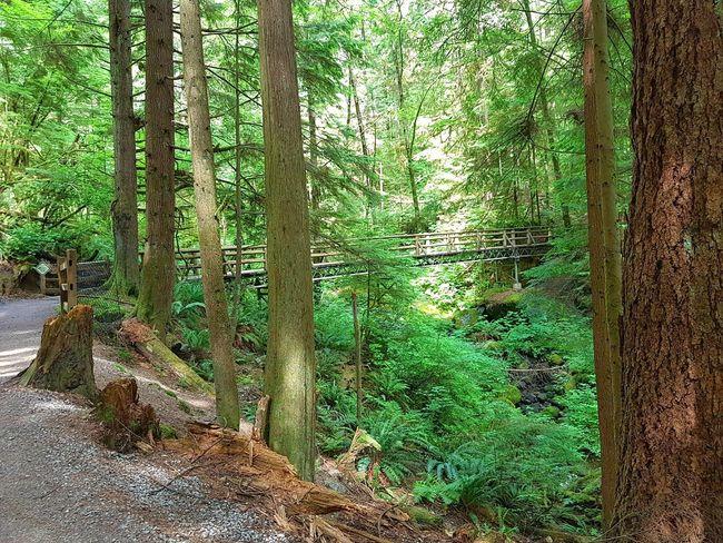 The bridge across the creek