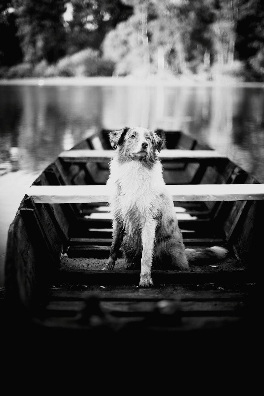 Australian Shepherd Sitting In Boat