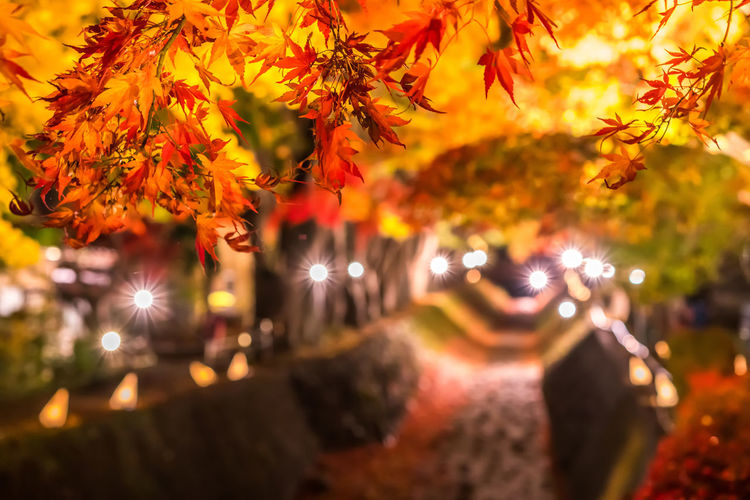Close-up of autumn leaves on street at night