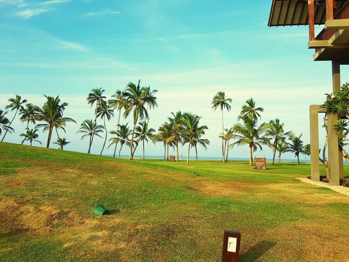 Chilaw Anantaya Resort Tree Tropical Climate Sky Outdoors Cloud - Sky Palm Tree Nature Beach Beauty In Nature