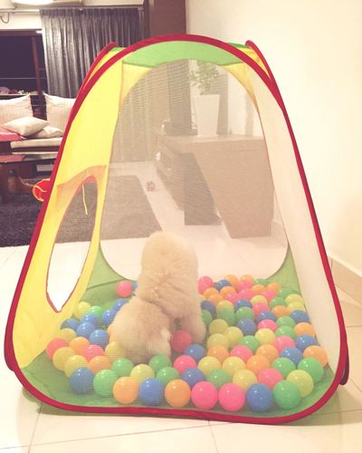 Deweythedog Toypoodle Newplay Balls Of Lights Colourful Summer Tent