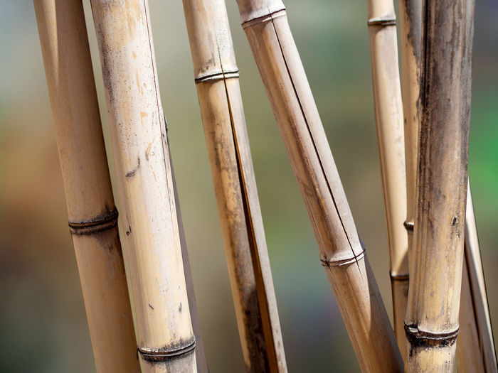 Close-up of bamboo on plant