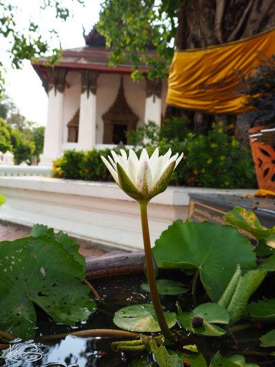 สงบ Relaxing Taking Photos Enjoying Life Hello World วัดสุวรรณดาราราม Holiday Thailand จ.พระนครศรีอยุธยา Temple