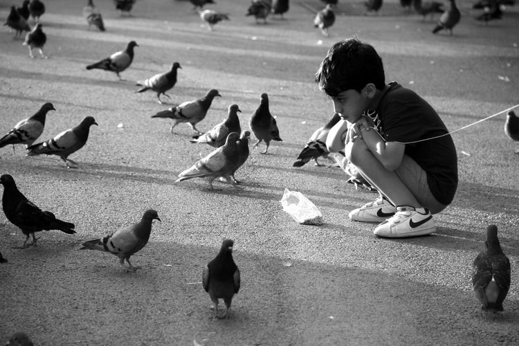 @LucianaLopezRec Animal Themes Animals In The Wild Bird Black & White Black And White Blackandwhite Blackandwhite Photography Children Only Day Outdoors Palomas Pigeon Pigeons Shadow My Year My View My Year My View EyeEm Gallery Mobile Photography Taking Photos Beauty In Nature EyeEm Nature Lover Outdoor Photography Black And White Photography Bnw_captures Treegasmic Tuesday Eyem Gallery Tree Branches My Year View My Year In View