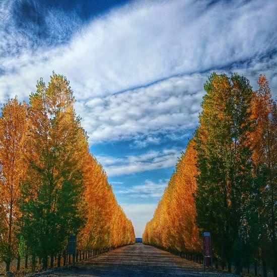 Mendoza Otoño 🍁 Mendoza Argentina Wine Photojournalism Autumn Landscapes Taking Photos Luz