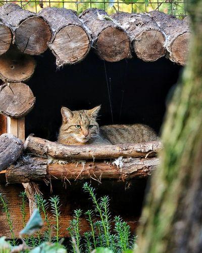Timber Wood -