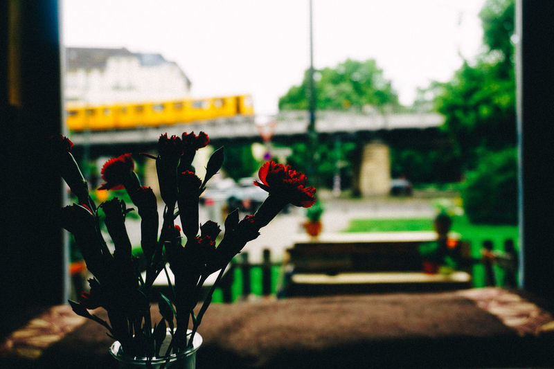 Berlin Cafe City Life Close-up Dark Day Flower Focus On Foreground Monorail  Nature No People Outdoors Overground Train Plant Red Schlesisches Tor Train Yellow Train