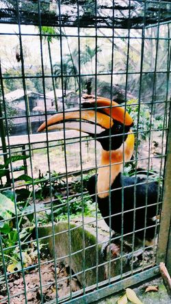Visiting old friend EyeEm Birds Bird Park Bird Photography Hornbill From Where I Stand Afternoon Walk Animal_collection Animal Photography