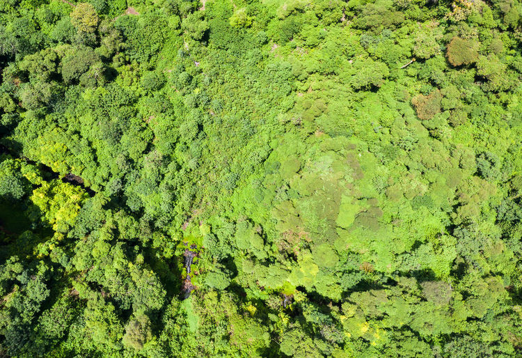 Aerial view of a forest Green Color Full Frame No People Backgrounds Plant Growth Day Nature Land Beauty In Nature Tranquility High Angle View Moss Foliage Lush Foliage Outdoors Tree Environment Green Forest Drone Photography Aerial View Droneshot