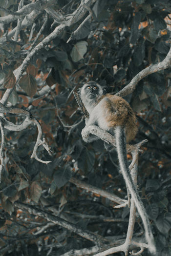 High angle view of squirrel on tree