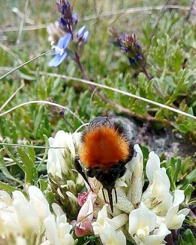 """""""De ki: Göklerde ve yerde neler var, bakın (da ibret alın!)"""" (Yûnus, 101) nereden bakarsa guzel nereden bakarsan guzel """"Görünmeyen Yaratıcı ALLAH C.C"""" Nature_collection Nature_collection Nature PhotographyArı Bee Flowers Animal Animal_collection Bee 🐝 Bee And Flower Flowers And Bee Kuranda Kuran-ı Kerim Ayet Nerede Nereden Bolu  Gerede Ovacık"""