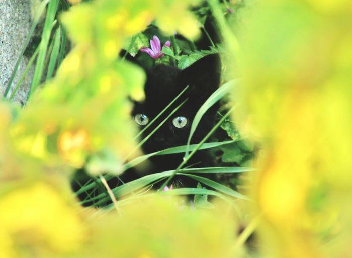 Cats Cats Eyes