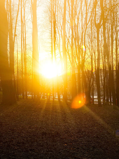 Sunlight streaming through trees during sunset