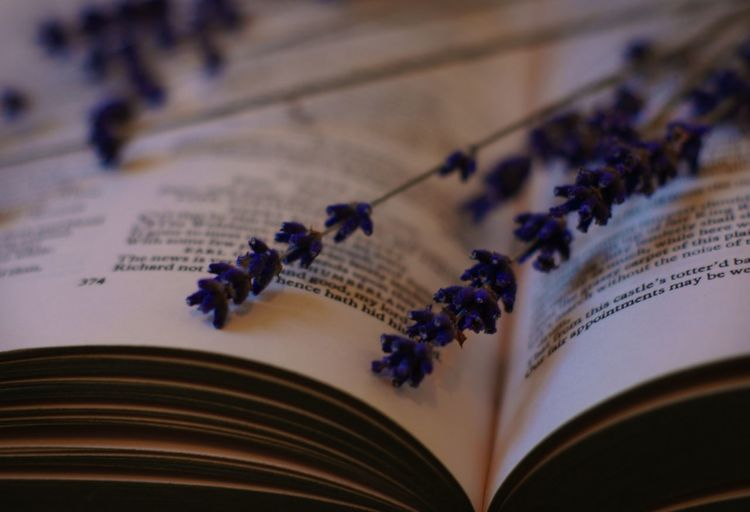 Close-Up Of Lavenders On Open Books