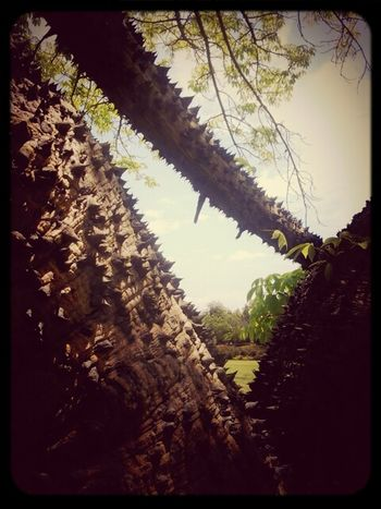 Tree of death #spikes #nature #kill #notreehugger Nature Sightseeing Danger