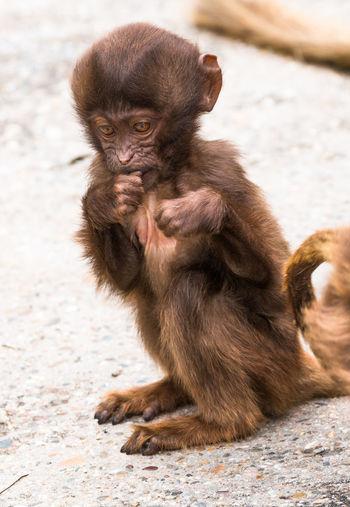 Baboon Baby Baby Monkey Monkey Pavement Primate Stuttgart Wilhelma Stuttgart Wilhelma Zoo WilhelmaZoo Zoology