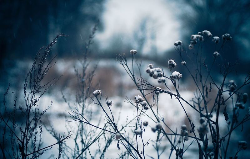 Close-up of snow on plants against sky