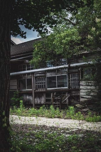 Plant Tree Architecture Built Structure Nature No People Growth Green Color Grass Land Day Building Exterior Obsolete Outdoors Tranquility Old Building Sunlight Abandoned Field