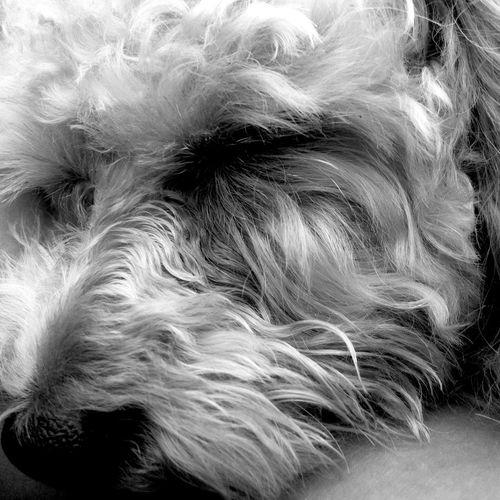 -_ S L Σ Σ Ρ _- It's A Beautiful Thing Dogs Blackandwhite Cute Sleeping