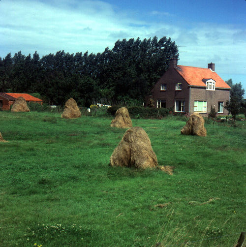 Houses on grassy field