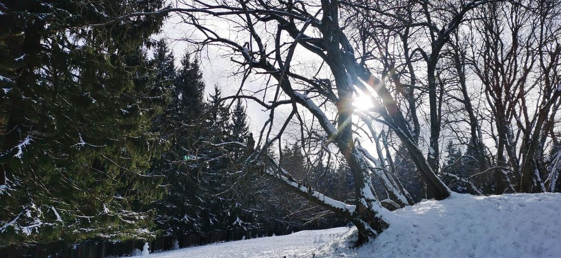 Sunlight streaming through trees during winter