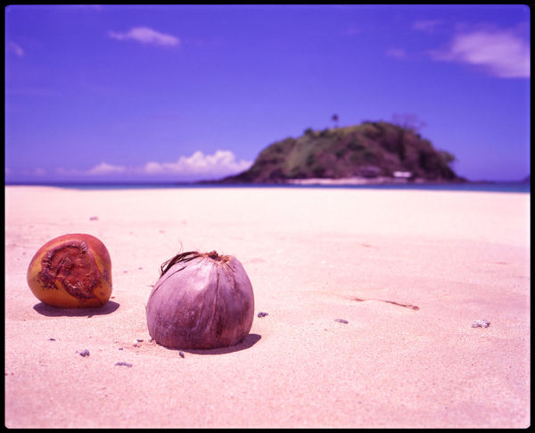 The life of a coconut Analogue Photography ASIA Beach And Sky Beach Life Blue Sky Coconut Coonut On Beach Dream Beach Dream Island El Nido Medium Format Nacpan Palawan Palm Beach Palms Philippines Plants On Beach Secret Escape Sky And Palms Slide Travel White Beach
